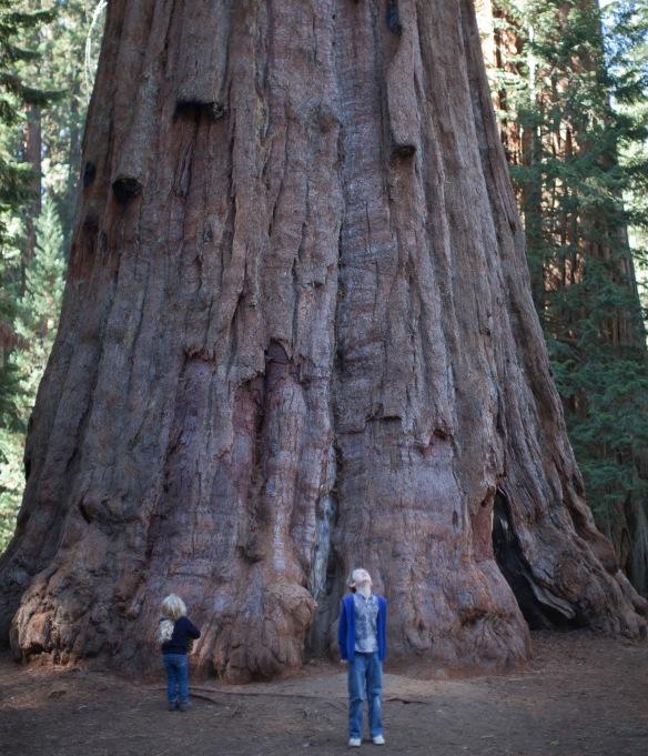 AlAuSequoia103014