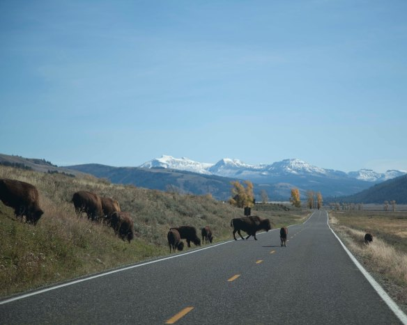 Yellowstone100614