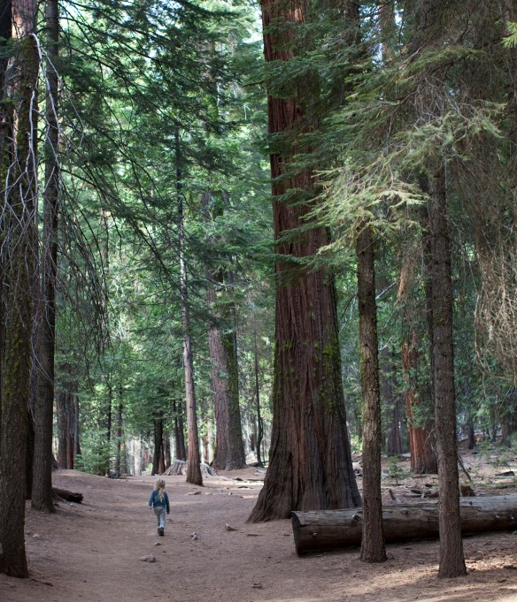 YosemiteAu103014